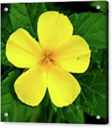 The Yellow Flower Acrylic Print