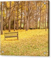 The Yellow Leaves Of Fall Carpet The Ground Of A Ginkgo Biloba Grove. Cm3 Acrylic Print
