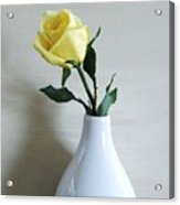 The Yellow Rose Of Acrylic Print