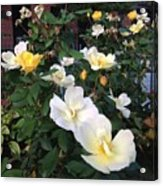 The Yellow Roses Of Fulton Street Acrylic Print