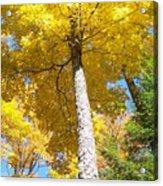 The Yellow Umbrella - Photograph Acrylic Print