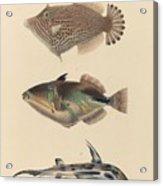 The Zoology Of Captain Beechey's Voyage  Acrylic Print