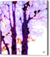 Thee Trees Acrylic Print