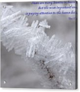 There Are Many Lessons To Learn... Acrylic Print