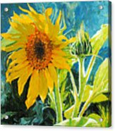There's A New Bud In Town Acrylic Print by Chris Steinken