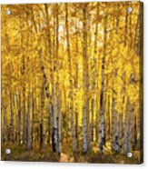 There's Gold In Them Woods  Acrylic Print