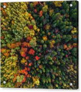 These Are Trees Acrylic Print