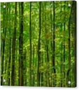 Thick Forrest Acrylic Print