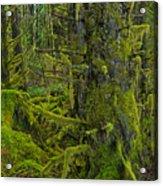 Thick Rainforest Acrylic Print