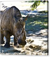 Thick Skinned Acrylic Print