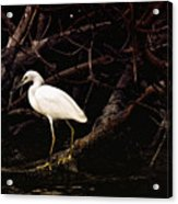 Thicket Acrylic Print