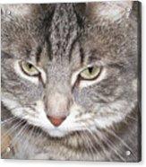 Thinking Holly The Cat Acrylic Print