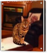 Thinking Of You - Bengal Cat Acrylic Print