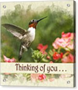 Thinking Of You Hummingbird Garden Jewel Greeting Card Acrylic Print