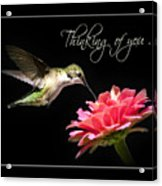 Thinking Of You Hummingbird Greeting Card Acrylic Print
