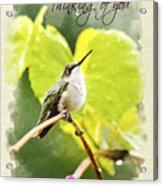 Thinking Of You Hummingbird In The Rain Greeting Card Acrylic Print