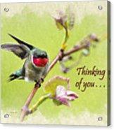 Thinking Of You Hummingbird Wing And A Prayer Greeting Card Acrylic Print