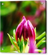 This Bud's For You Acrylic Print