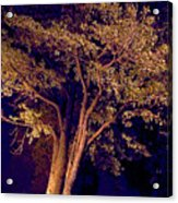This Difficult Tree Acrylic Print