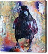 This Ebony  Bird Acrylic Print