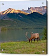 This Is Alberta 10 - Bucks Sunset Snack Acrylic Print