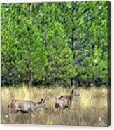 This Is British Columbia 14 - Two And Three Points Acrylic Print by Paul W Sharpe Aka Wizard of Wonders