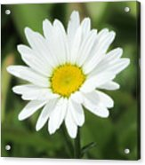 This Is Spring Acrylic Print