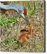 This Is What We Eat Acrylic Print