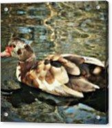 This Little Duck Acrylic Print