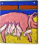 This Little Piggie Acrylic Print