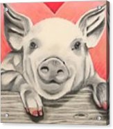 This Little Piggy... Acrylic Print