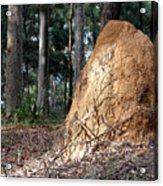 This Mound Has Termites Acrylic Print