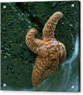 This Starfish Has A Good Grip Acrylic Print