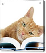 This Tabby Cat Loves Books  Acrylic Print