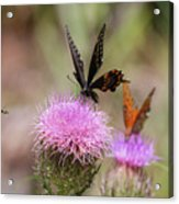 Thistle Pollinators - Large And Small Acrylic Print