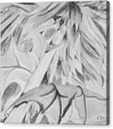 Thistle Acrylic Print