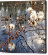 Thistles And Geese  Acrylic Print