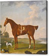Thomas Egerton's Chestnut Hunter With A Groom And Two Hounds And A Terrier In A River Landscape Acrylic Print