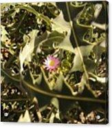 Thorn Love Acrylic Print