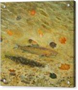 Thorndike Pond Trout Acrylic Print