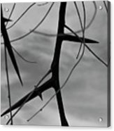 Thorns In Silouette Acrylic Print