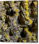 Thorns Of Silk Acrylic Print