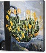 Thornton: Aloe Acrylic Print