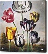 Thornton: Tulips Acrylic Print