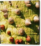 Thorntree Acrylic Print