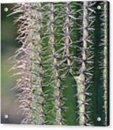 Thorny Cactus Acrylic Print