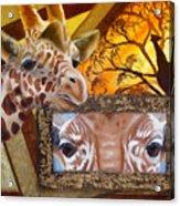 Those Eyes     Giraffe  Safari Series No 3 Acrylic Print