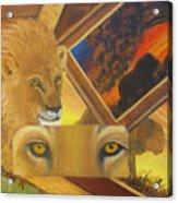 Those Eyes Lion Acrylic Print