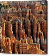 Those Hoodoo's.  Bryce Canyon Acrylic Print by John Rav