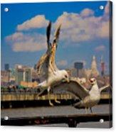 Those Jersey Gulls  Acrylic Print